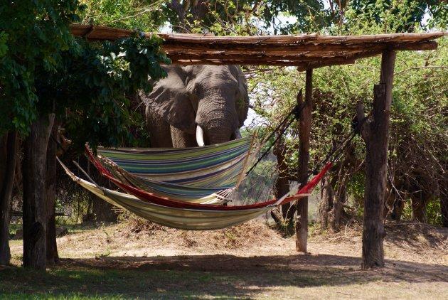 Relaxen in een hangmat