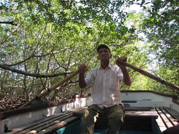 je laten roeien door de Mangrove