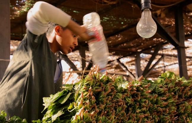 naar de markt in Hurghada