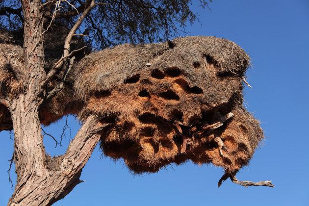 Gezamenlijk Nest