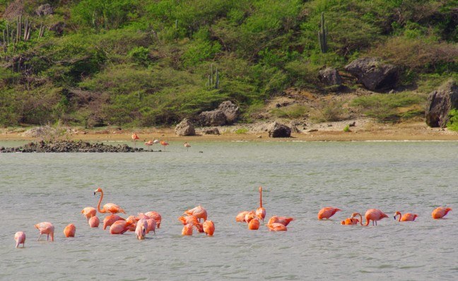Kom dichtbij de flamingo's