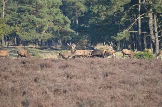 Wild spotten in Nederland