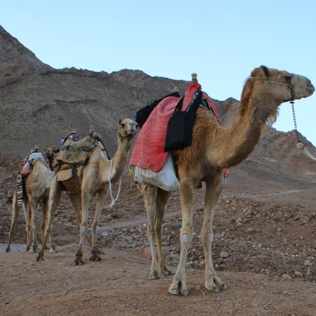 Schip van de woestijn