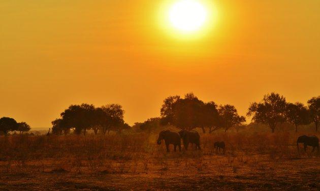 Wildlife bij Zonsondergang