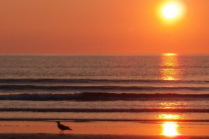 British Coast 10 - Whitesands Bay