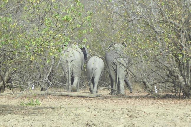 Oud en jong in Mole National Park