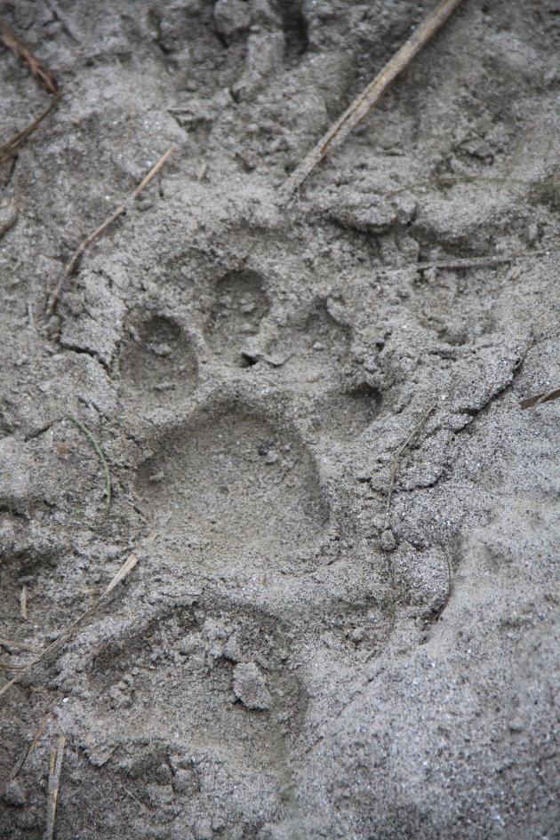 Opzoek naar wild in Chitwan