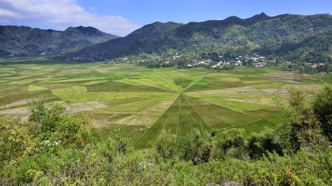Spiderweb rijstvelden