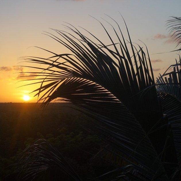Zonsondergang in de jungle