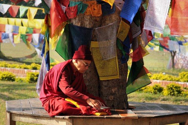 boeddhistische studie