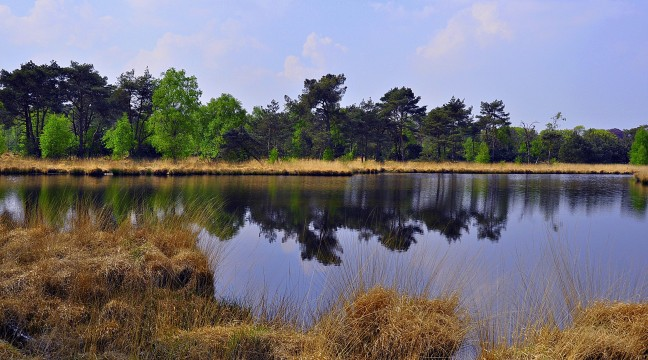 Kalmthoutse Heide !