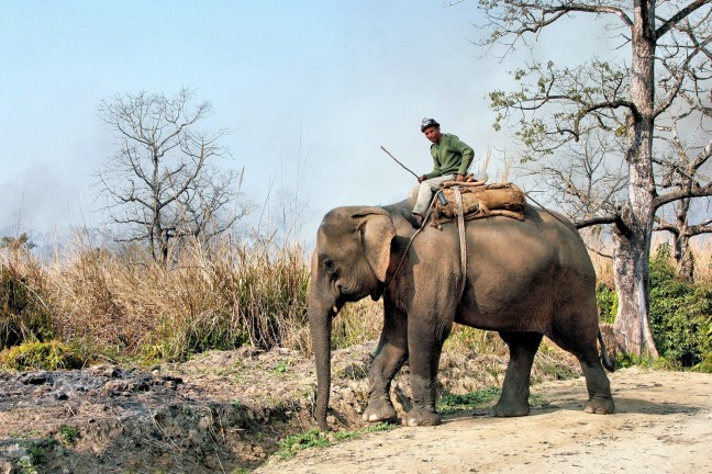 olifantengras