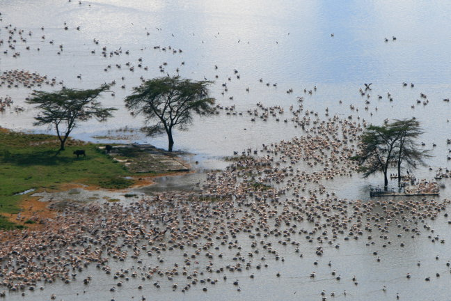 lake Nakuru van boven af