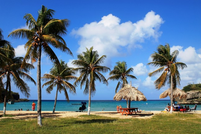 Wuivende Palmen op Playa Santa Cruz