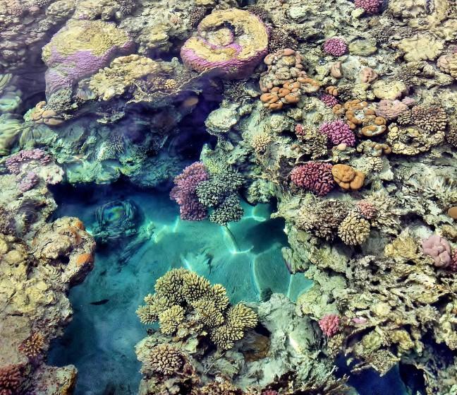 Kleurrijk koraal