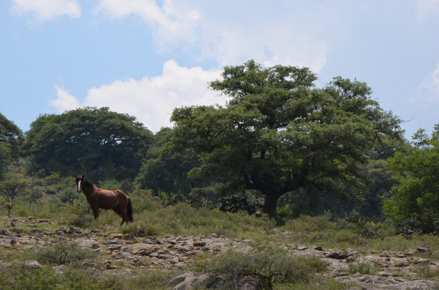 Wilde paarden spotten in natuurgebied los Organos