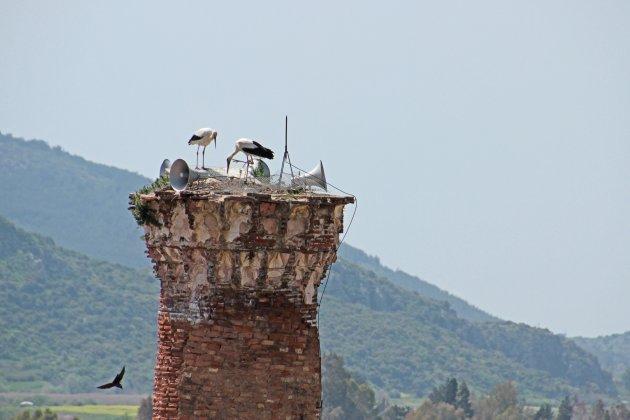 minaret met ooievaars
