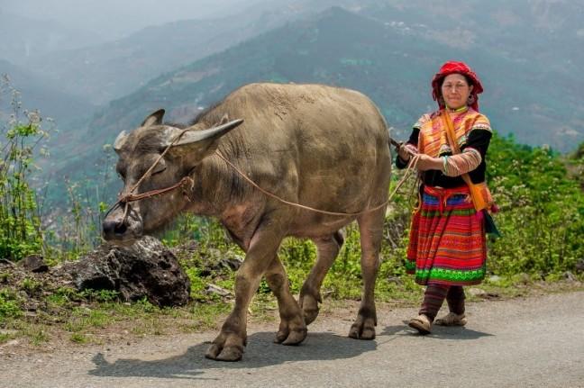 de koe bij de staart vatten
