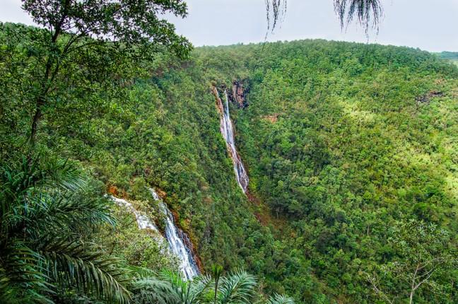 Tropische jungle