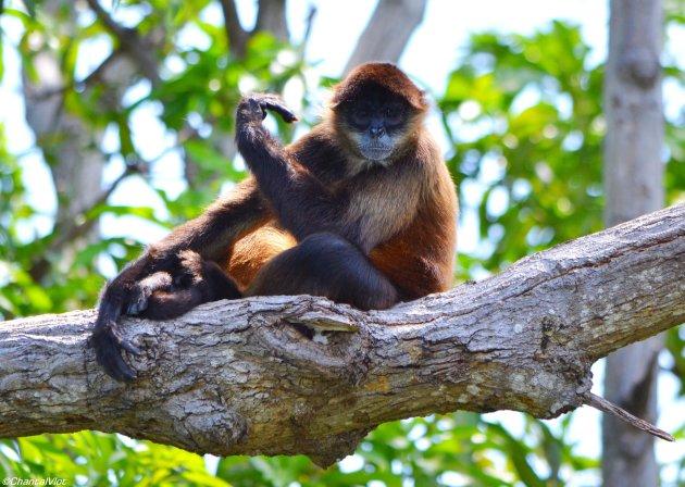 Zit ik mooi voor aap!