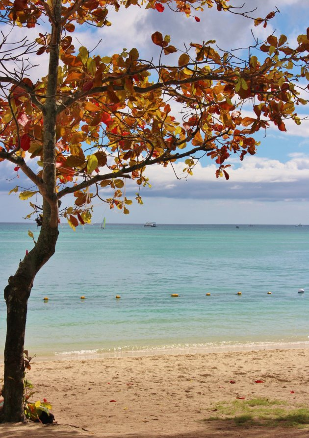 eenzame boom op strand