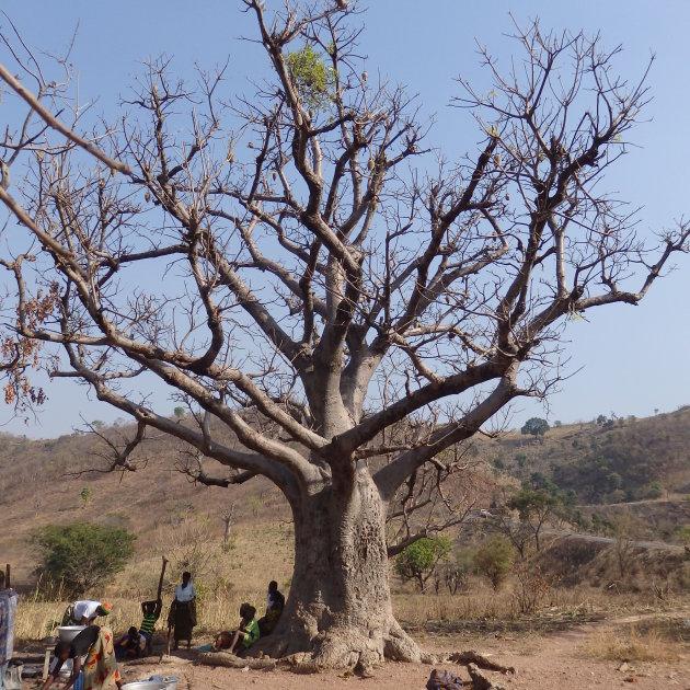 Onder de Baobab
