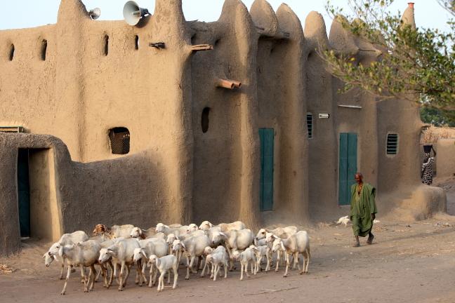 met de geiten op stap