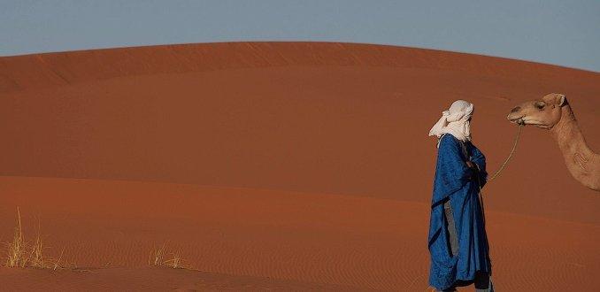 Koppige kameel