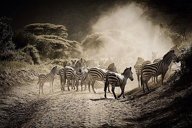 Dit noem ik nu een zebra crossing