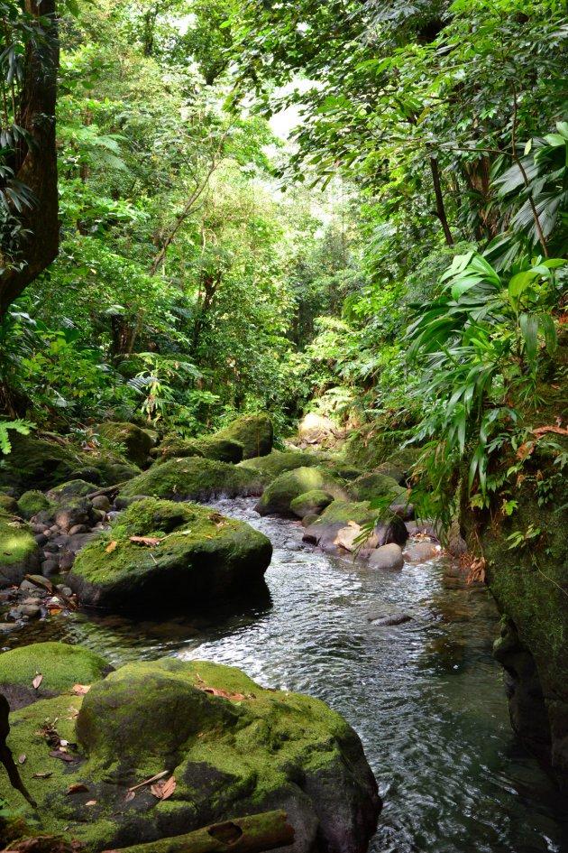 Water, groen en weer water en groen