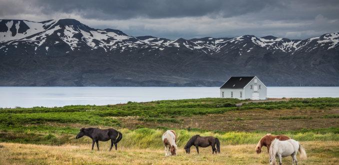Typisch IJsland