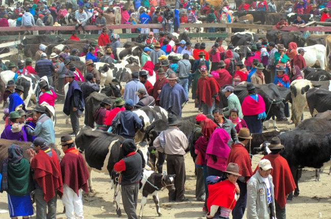 Markt in Guamote