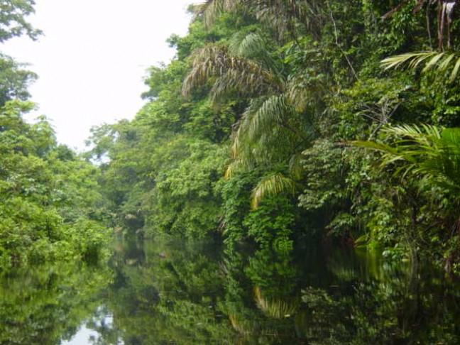 Water en oerwoud