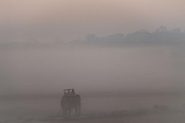 Olifanten in Sauraha