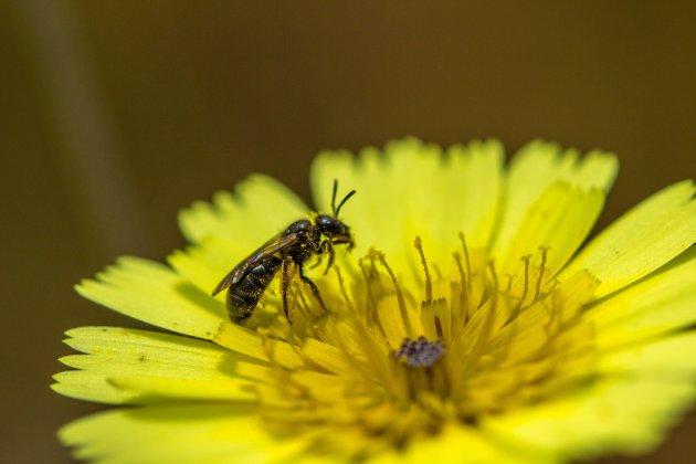 Een heel klein insectje