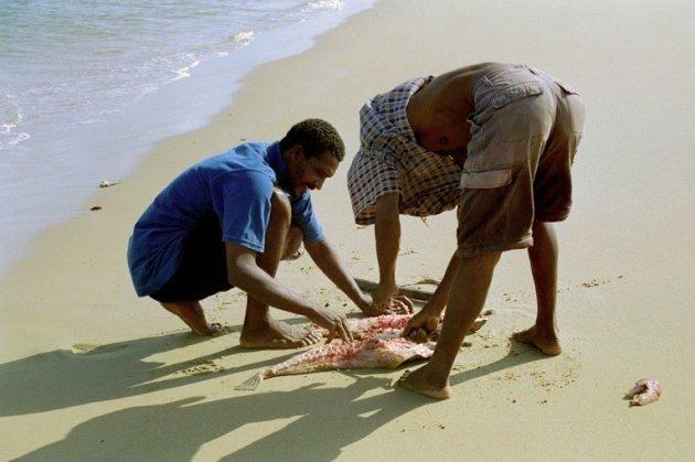 Vis in het zand