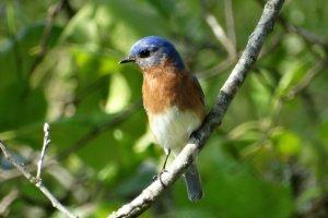 lovely singing bird