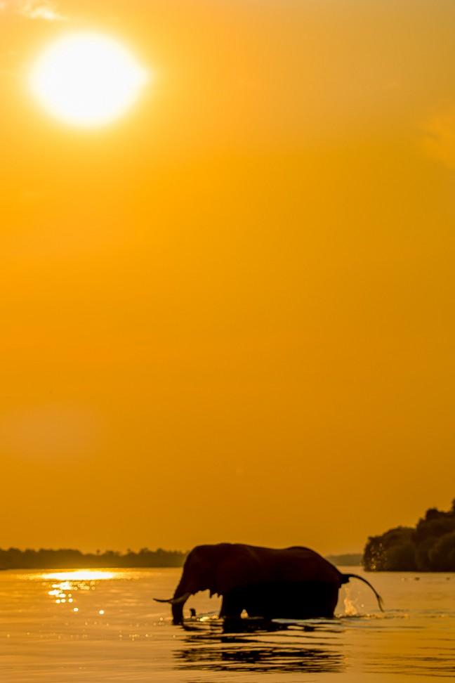 olifant bij sunset
