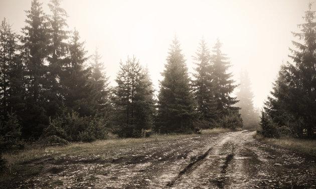 Jeeptour in mistige bossen
