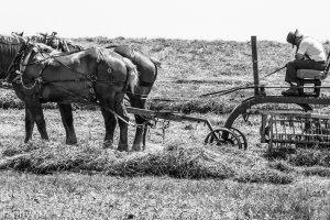 Slaapende landwerker