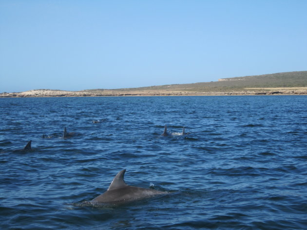 The Nullarbor: dolfijnen spotten