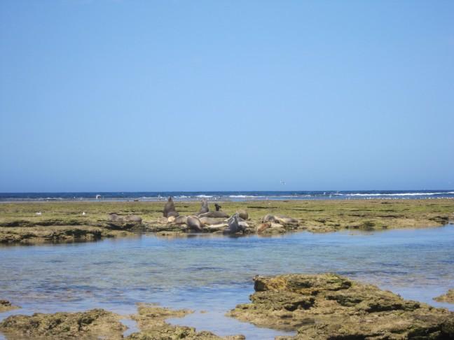 The Nullarbor: zwemmen met dolfijnen en zeehonden