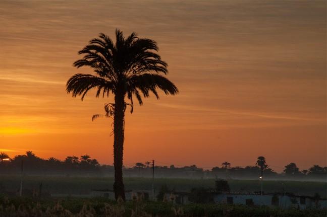 Palmboom tegen mooie avondlucht