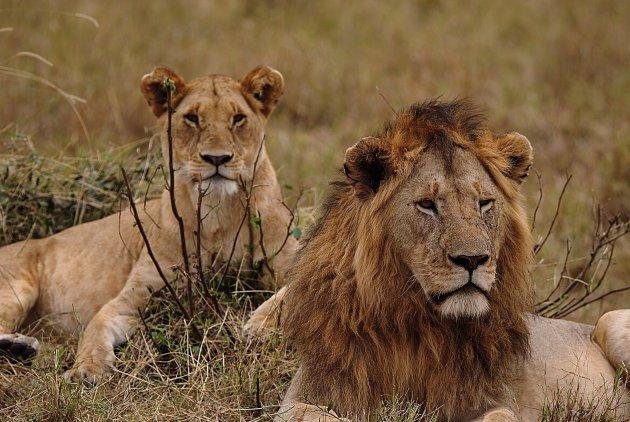 het leeuwen deel