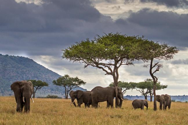 donkere wolken boven de olifanten