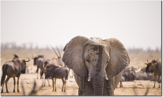 Etosha The Animal Kingdom!