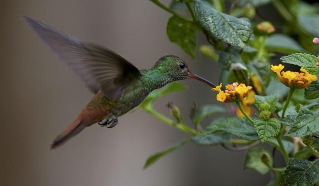 Op zoek naar nectar
