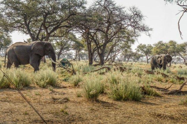 Luxe kampeersafari in Botswana