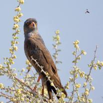 '509666' door vulture1960