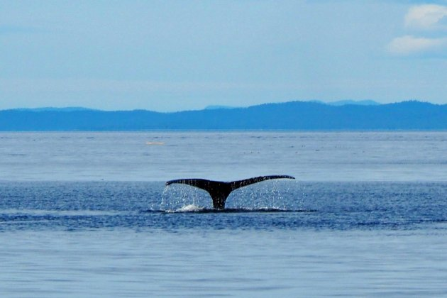 Tail of a whale!